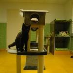 kattenkamer 4