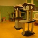 kattenkamer 3