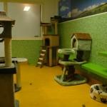 Kattenkamer 2