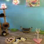 Kattenkamer 3f