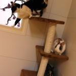 katten en konijn