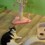 kattenkamer 4f