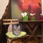 kattenkamer11f