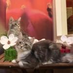 kattenkamer7f