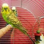 vogeltjes pension f