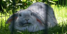 Laura's konijn
