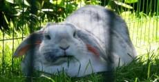 Laura's konijn f